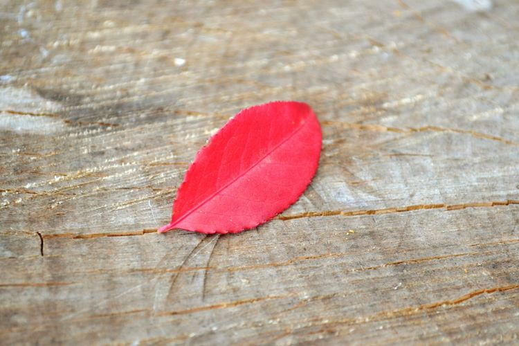 Close-up of red leaf on table