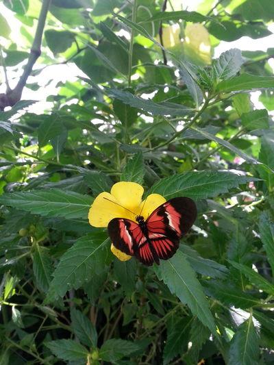 Schmetterling Fly! Blume Flower