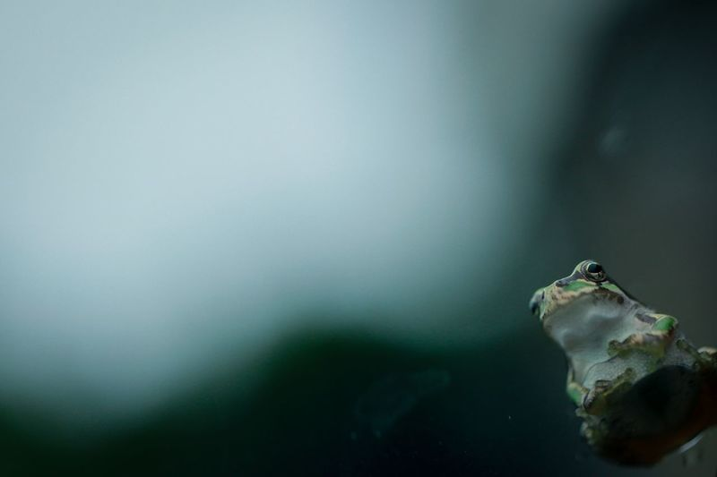 No People Indoors  Close-up Water Animal Themes Day Nature Frog