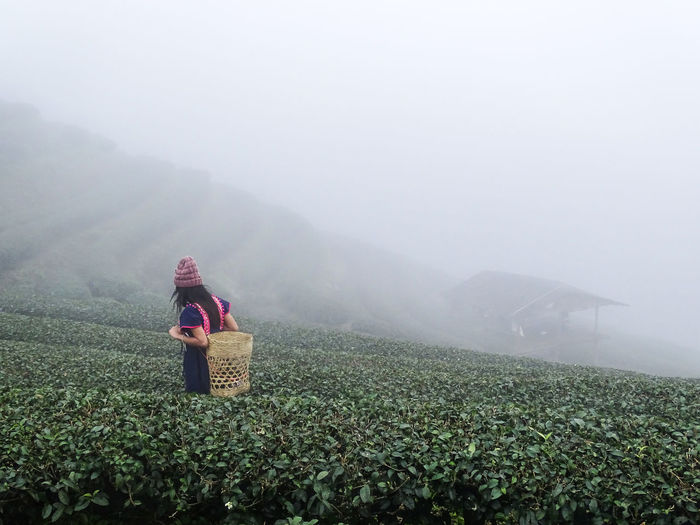 Woman with basket amidst tea crops during foggy weather