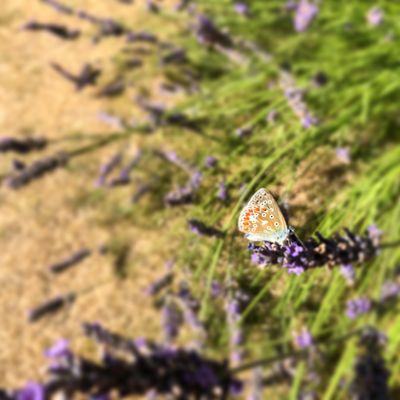 #butterfly #wildlife Plant Invertebrate Animal Wildlife Flower Close-up One Animal Insect Animal Beauty In Nature Animals In The Wild Animal Themes Selective Focus Growth Flowering Plant No People Nature Animal Wing Focus On Foreground Day Fragility