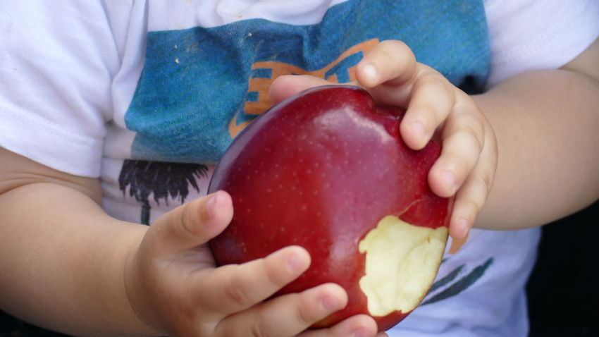Apple Boys Child Childhood Close-up Day Eating Food Food And Drink Freshness Fruit Healthy Eating Healthy Lifestyle Holding Human Body Part Human Hand Indoors  Kid Hand  Lifestyles Midsection People Real People Red