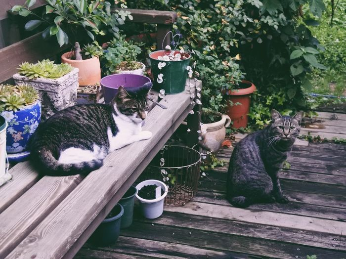 Potted Plant No People Day Outdoors Wood - Material Plant Flower Mammal Garden Photography Garden Japan Photography Vscocam Nikonphotography Nikon Cat Cats Cats Of EyeEm VSCO Calm Japan Pets Plant Animal Themes Pet Portraits Vscogood