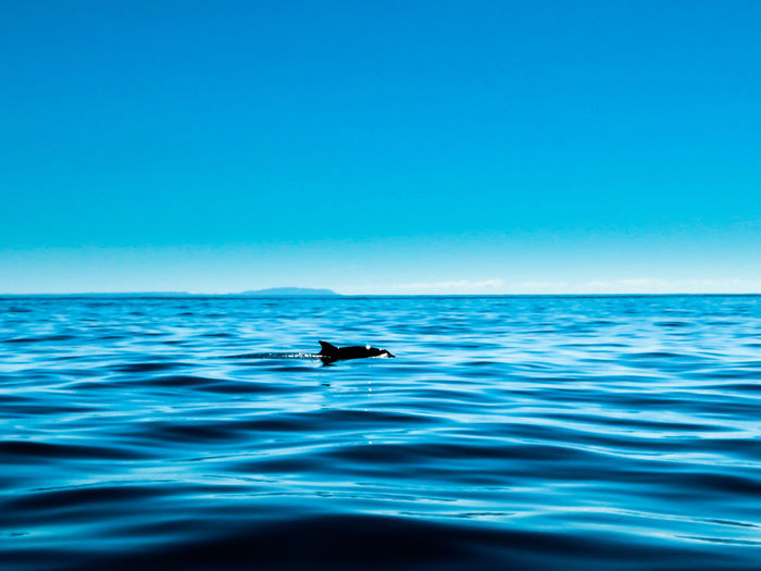 Dolphin ocean