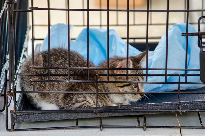 Cat sleeping in cage