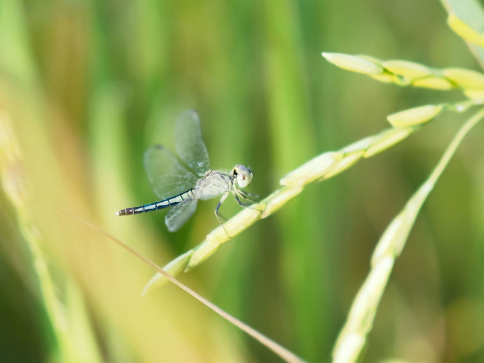 Animal Wildlife Animals In The Wild Animal Invertebrate Animal Themes Insect One Animal Plant Green Color Close-up Nature Focus On Foreground Day No People Beauty In Nature Growth Animal Wing Plant Part Selective Focus Leaf Blade Of Grass