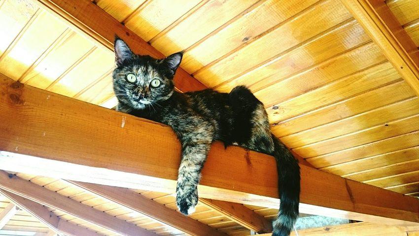 Cat My Cat Turkey Ankara Waiting Yht