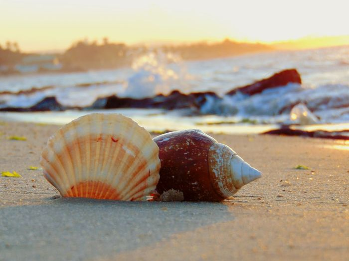 Surface level of seashells at beach during sunset
