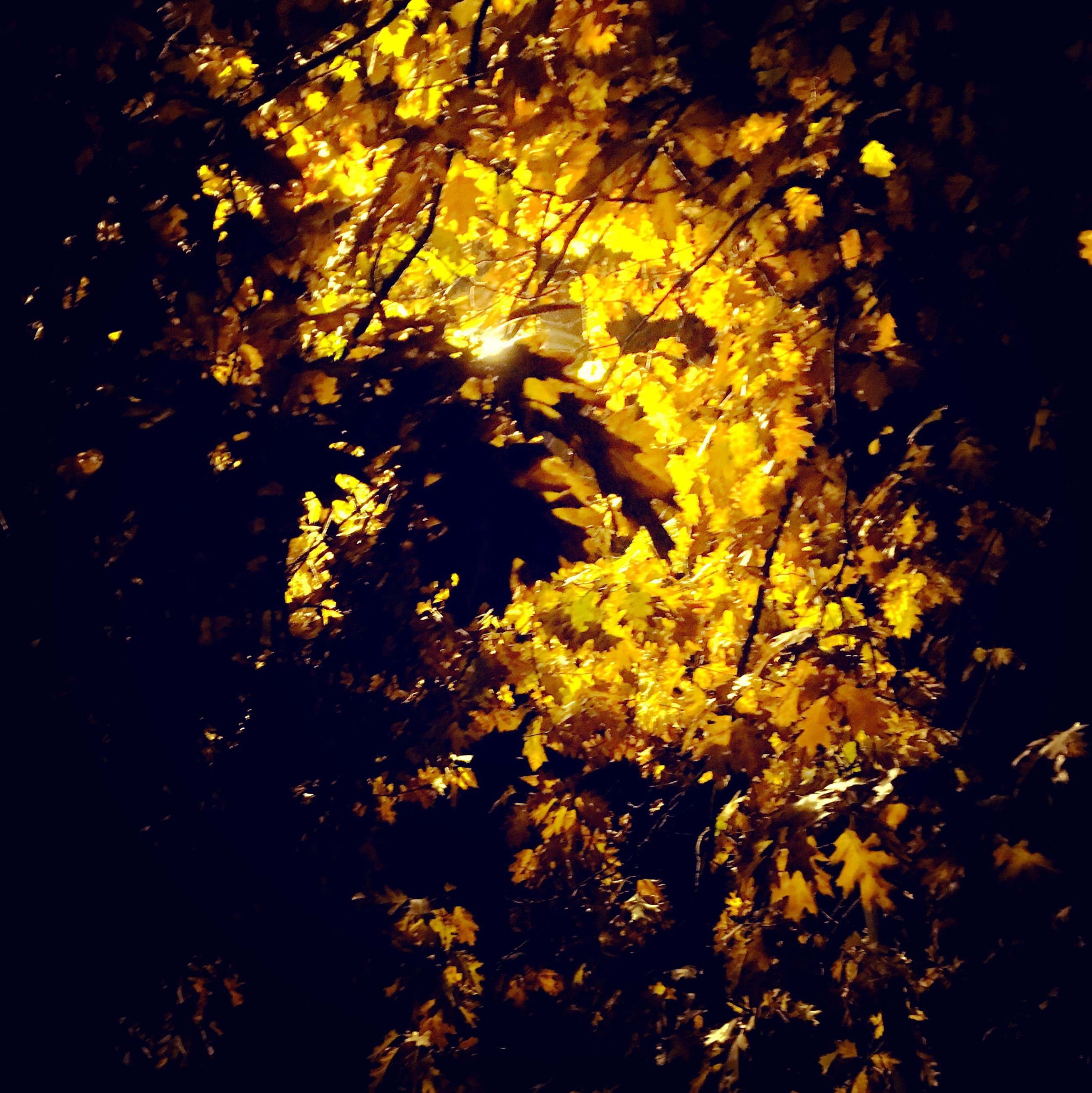 tree, branch, growth, low angle view, tranquility, nature, forest, beauty in nature, sunlight, silhouette, leaf, yellow, scenics, tranquil scene, autumn, outdoors, no people, night, sunbeam, sun