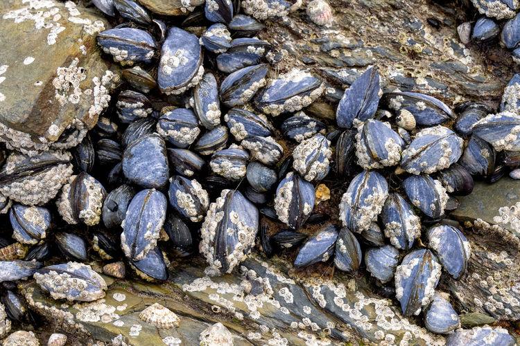 Full frame shot of pebbles on rock