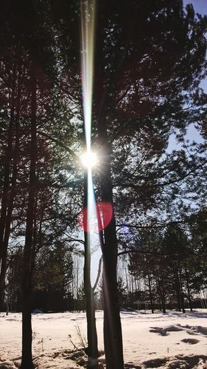 Nature Sunlight Low Angle View Beauty In Nature Sky Day Sun Outdoors