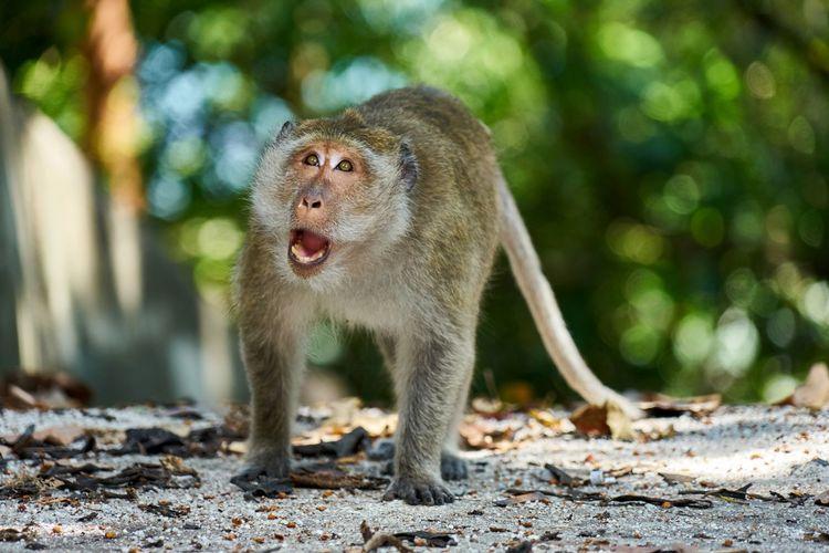 Monkey standing on ground