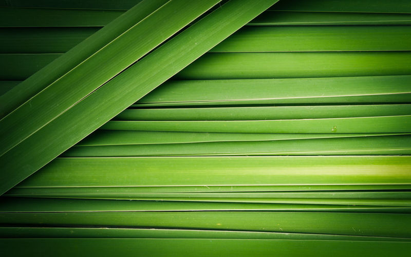 Backgrounds Banana Leaf Beauty In Nature Close-up Day Freshness Frond Full Frame Green Color Growth Leaf Nature No People Outdoors Palm Tree Pattern Plant Textured  Tranquility Tree