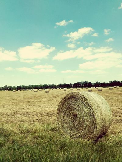 Agriculture Field Rural Scene Farm Crop  Sky Cloud - Sky No People Day Outdoors Nature Landscape Growth Cereal Plant Hay Bale Live For The Story The Great Outdoors - 2017 EyeEm Awards EyeEmNewHere