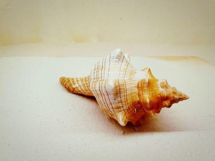 nature sea shell on white background EyeEmNewHere Editor's Picks Nature Photography White Background Indoors EyeEm Selects Close-up Seashell Animal Shell Honeycomb APIculture First Eyeem Photo EyeEmNewHere