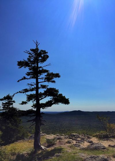 Pine tree on top of Haystack Mountain. Haystack Mountain View From Haystack Mountain Maine North Woods Vista Tree Nature Tranquility Beauty In Nature Scenics Blue Tranquil Scene Landscape Sky Growth No People Outdoors Forest Betterlandscapes