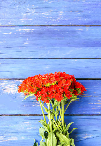 Directly above shot of red flowers on wooden table