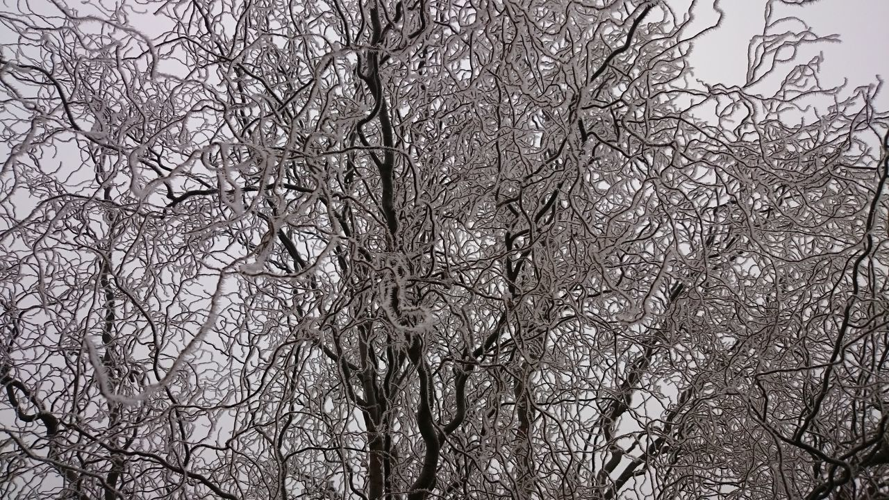bare tree, branch, tree, nature, low angle view, beauty in nature, outdoors, no people, tranquility, winter, day, cold temperature, sky, clear sky