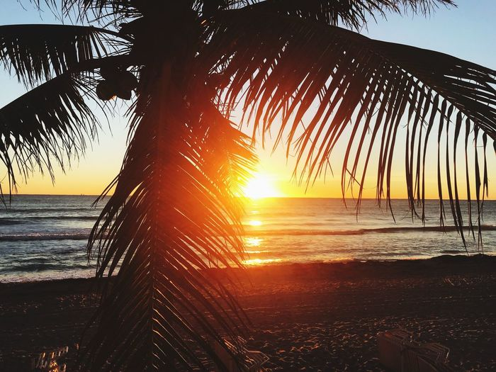 Sunset Beach Nature Beauty In Nature Palm Tree Horizon Over Water Scenics Silhouette Tranquility Ocean Sunrise