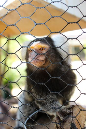 Animals should not require our permission to live on earth. Animals were given the right to be here long before we arrived. Caged Animals Save Animals Marmoset Monkey Marmoset Monkey Animal Themes One Animal Animals In The Wild Cage Day No People Animal Wildlife Outdoors Close-up Mammal Nature