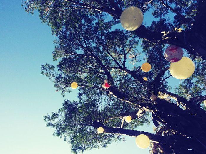 クリスマス Cristmas Tree