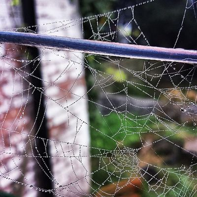 Captured this earlier in the morning. Engineering Icu_nature Ic_nature Ic_ireland ireland insta_ireland icu_ni inspireland icu_ireland picoftheday photography photooftheday garden colour closeup belfast nature spider spiderweb labour water droplets waterdroplets web home early morning insta_photography insta_photo insta_nature