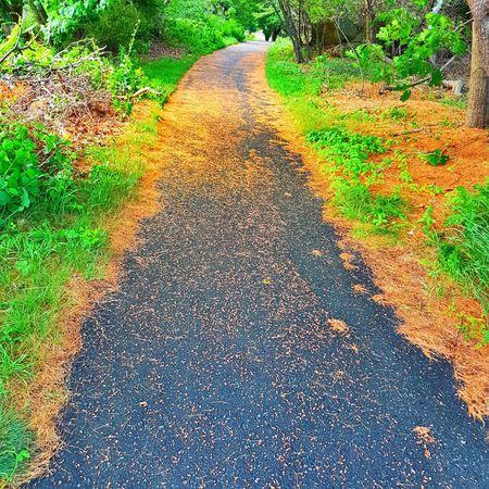 Day Grass Road The Way Forward Outdoors High Angle View Nature No People Plant Green Color Growth Walkway Beauty In Nature Tree