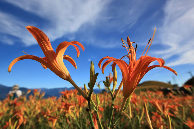 Done That. Hualien Taiwan Sixty Rock Mountain Beauty In Nature Blooming Close-up Day Day Lily Flower Flower Head Focus On Foreground Fragility Freshness Growth Nature No People Outdoors Petal Plant Sky The Week On EyeEm EyeEmNewHere