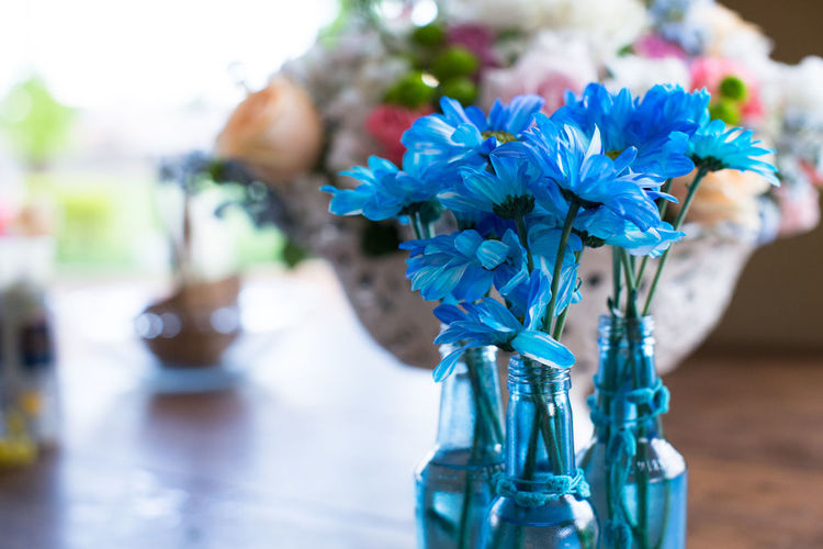 Close-up of blue flower in glass vase on table