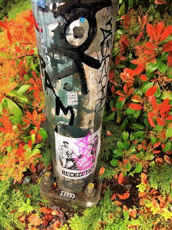 Leaf Creativity Plant Outdoors No People Growth Day Nature Seattle Graffiti Graff Metal - Material Pole Nature And City