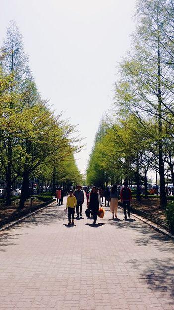 Korea Ilsan  Ilsan Lake Park