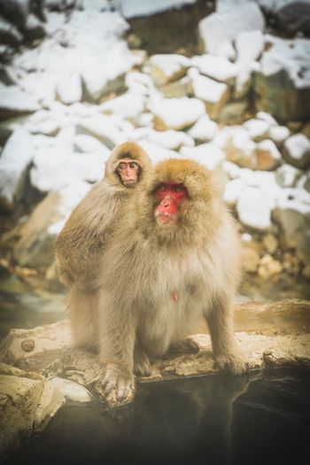 Mother and son bathing together in hot spring water during a cold winter day. Monkeys Snow Monkey Eyem Nature Lovers  Eyem Gallery EyeEm Selects EyeEm Nature Lover EyeEm Best Shots EyeEmNewHere EyeEm Selects Mom moments of happiness Primate Mammal Animals In The Wild Animal Wildlife Vertebrate Day Nature