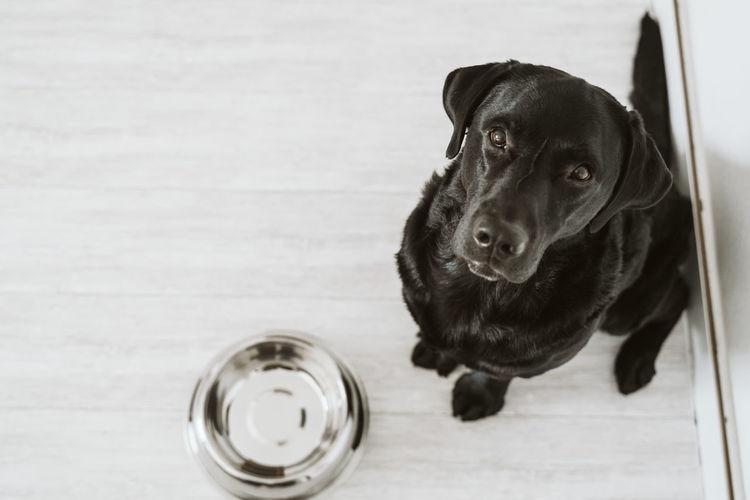 High angle view portrait of dog on hardwood floor
