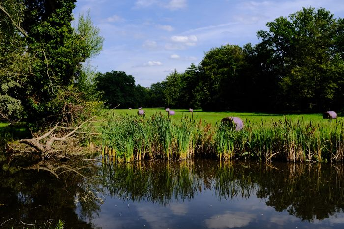 Postdam Reflection Tree Growth Sky Outdoors Day Nature No People Green Color Tranquil Scene Water Plant Scenics Beauty In Nature Fujifilm X100f Fujifilm-Xseries Landscape Germany🇩🇪 Postdam Sansoucci