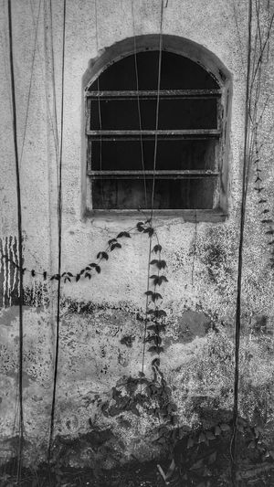 The Week Of Eyeem Week On Eyem The Week On Eyem Abandoned Place Abandonedplaces Architecture Building Exterior P&B B&w Window Sommergefühle Wine Not Let's Go. Together. EyeEm Selects
