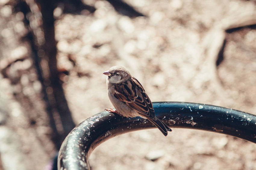 Animal Themes Animal Wildlife Animals In The Wild Beauty In Nature Bird Branch Close-up Day Focus On Foreground Nature No People One Animal Outdoors Perching Tree