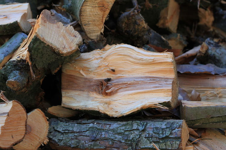 100mm Broken Close-up Cut Wood December 2015 Detail Dry Rabland,sudtirol Trunk Wintertime Wood