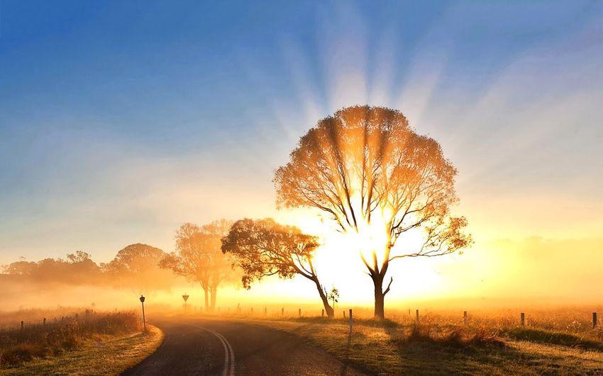 Sunset 🌅 Sunset Nature Road Tree Scenics Sunlight Beauty In Nature Landscape Sunbeam