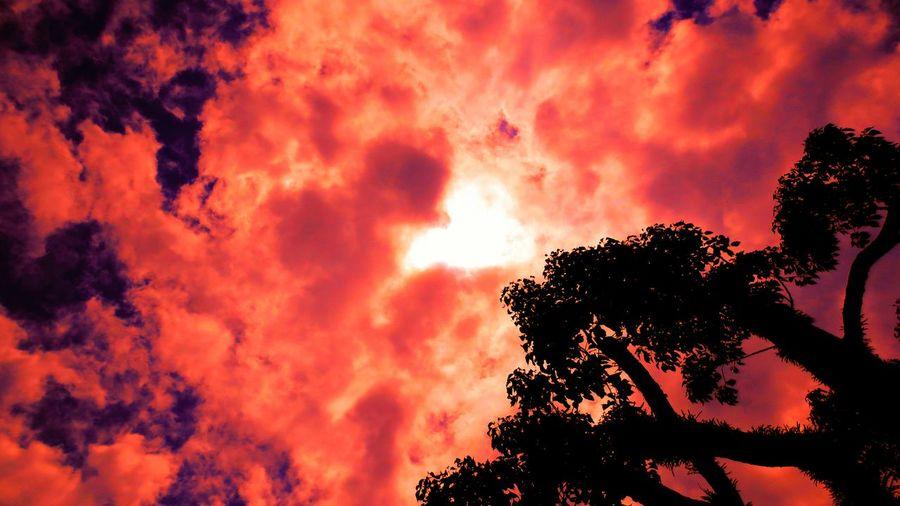 「 バカな……早すぎる!」To Be Continued! で、お休み~♪( ^.^)( -.-)( _ _) Good Night🌃 ダーク部 Sky And Trees Dark Side Space Silhouette Sunset Silhouettes Tree Silhouette Sunset Silhouette Silhouettes