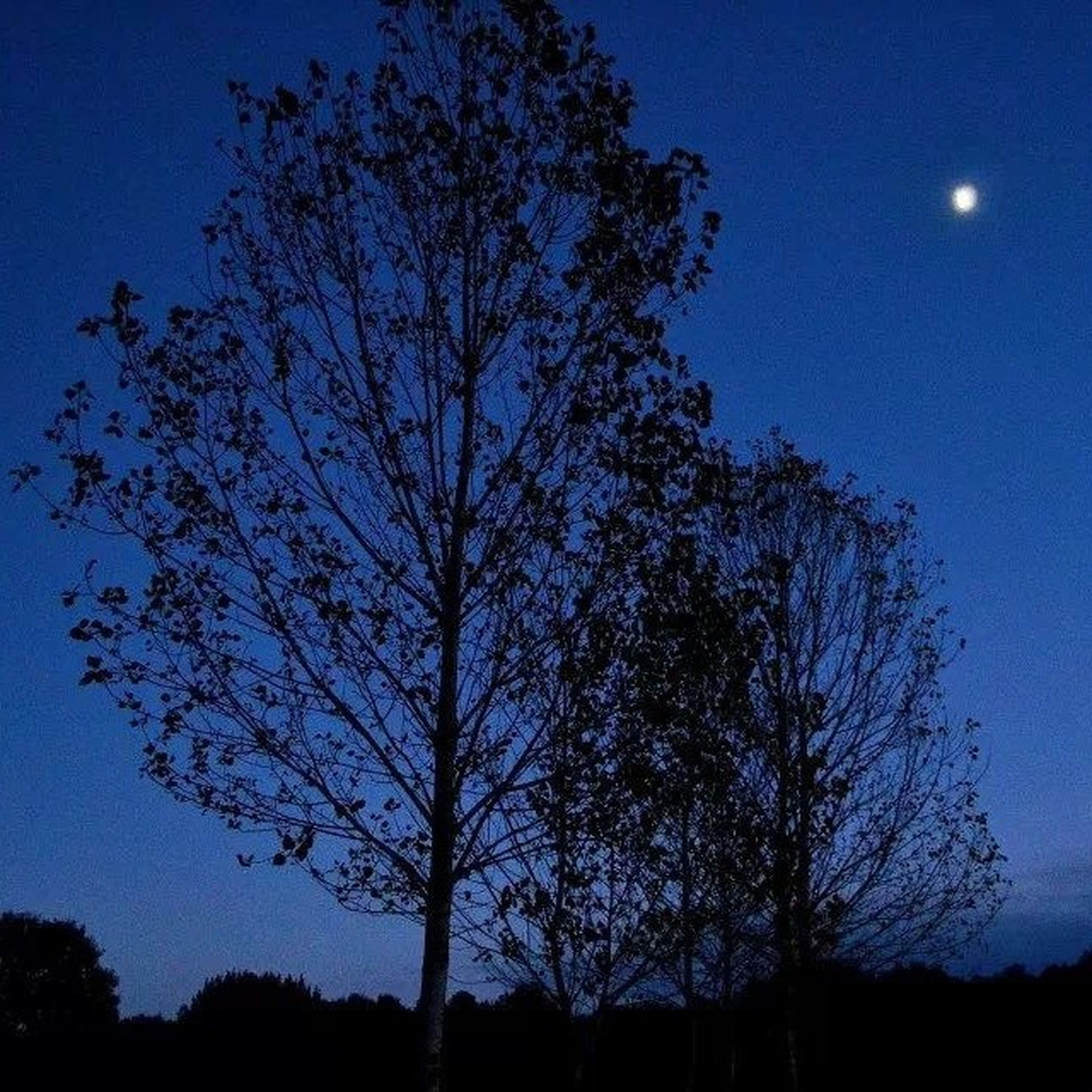 silhouette, tree, low angle view, tranquility, beauty in nature, blue, tranquil scene, moon, scenics, sky, nature, night, clear sky, bare tree, branch, dusk, idyllic, dark, growth, outdoors