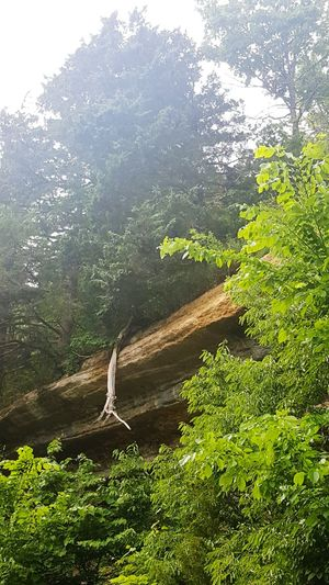Natures Diversity Natures Diversities Roots Of Tree Cliffside TreePorn Tree Porn... Rock Wall With Trees Check This Out Nature_collection Eyem Gallery Eyem Nature Lovers  Eyem & Getty Collection Android Ozarks Mountain Life Market Bestsellers May 2016 The Great Outdoors - 2016 EyeEm Awards