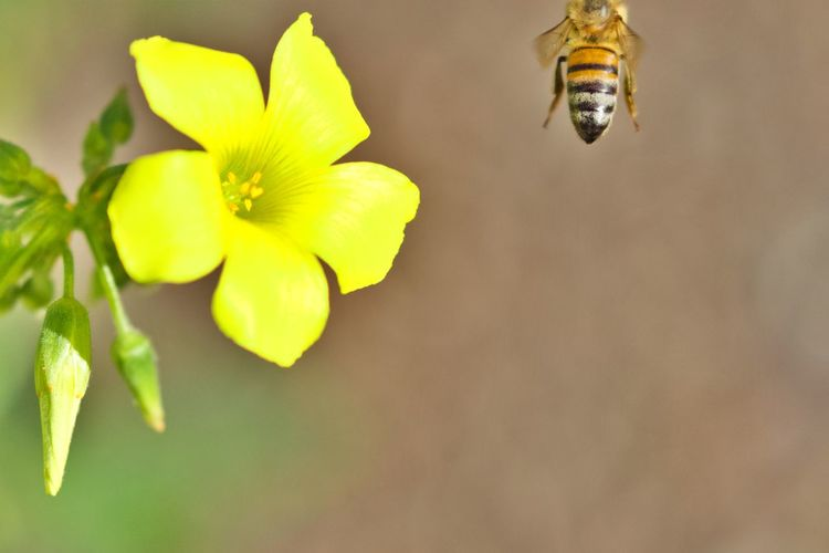 Flower Freshness Close-up Flower Head Flowering Plant Petal Yellow No People Nature Fragility Animal Wildlife Leaving Taking Off Animals In The Wild Animal Themes Animal Bye Bye Bee