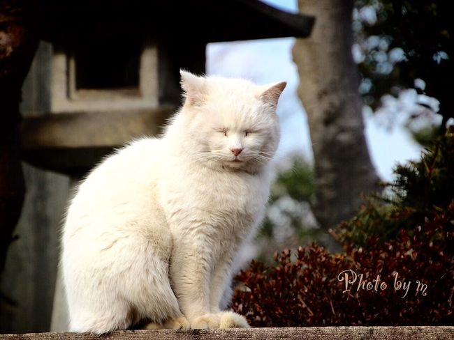 Cat Cat♡ 野良猫 Stray Cat 猫 Cat Lovers ローアングル Animal Photography 白猫