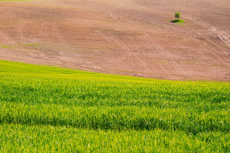 Landscape Green Color Environment Plant Rural Scene Land Agriculture Scenics - Nature Growth Beauty In Nature Field Nature Farm Grass Day Tranquility Tranquil Scene No People Crop  Outdoors