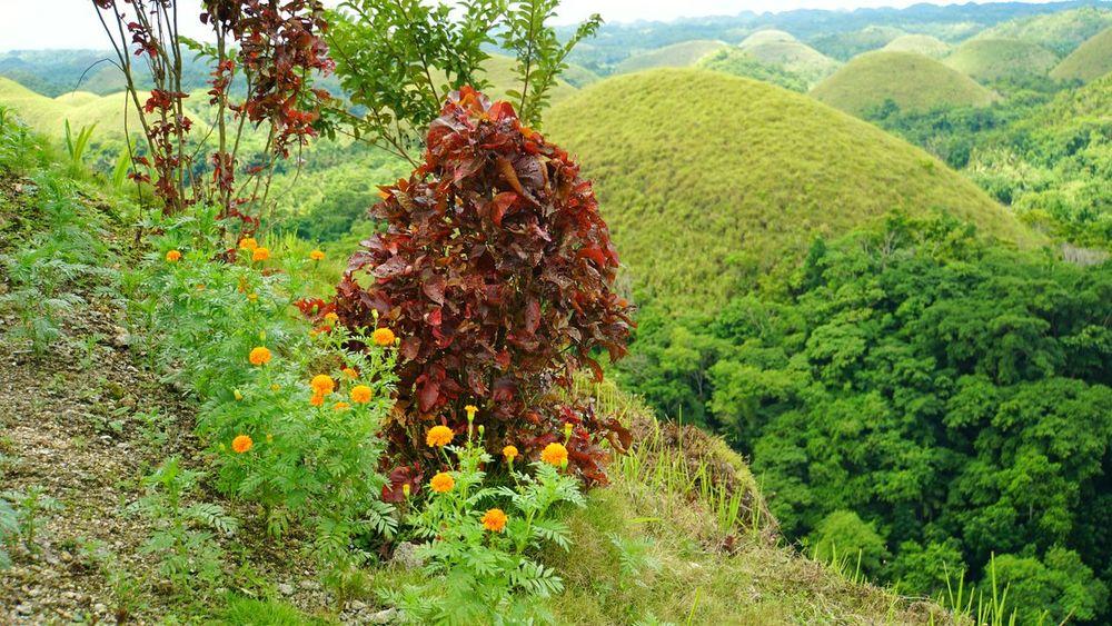 Flowers Nature Chocolatehills Bohol Philippines Vacation Wishlist