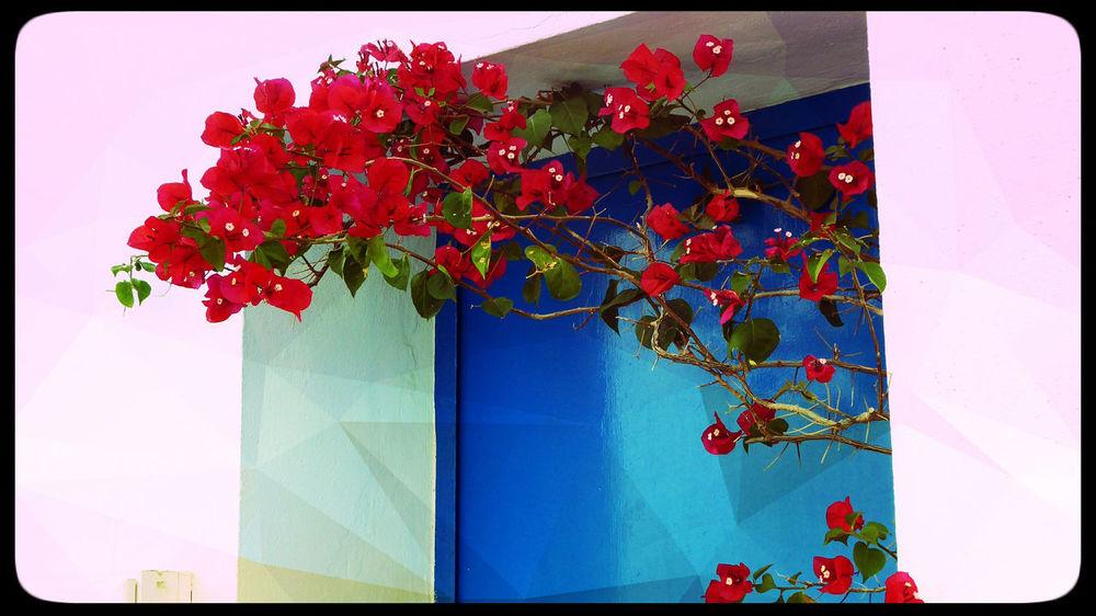 A Colourful Doorway Doorway SPAIN Bougainvillea Flower Flowering Plant Olvera Spain Plant Pueblos Blancos Red Blossom