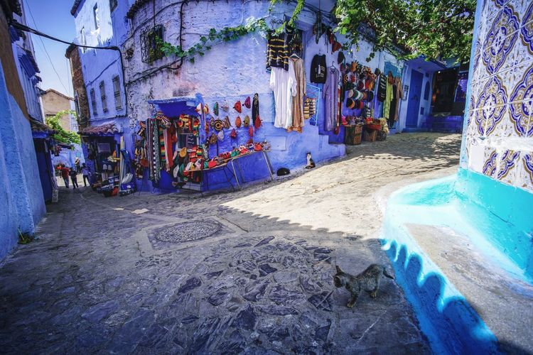 """""""The Blue City"""" - Chefchaouen, Morocco. Chefchaouen Chefchaouen Medina Medina Morocco MoroccoTrip EyeEmNewHere a new beginning Digital Nomad Travel Travel Destinations Traveling Travel Photography Photography Blue City Alley Maze Arabic Moroccans Tourism Tourist Attraction  Tourist Destination Architecture Built Structure Building Exterior Building Day Tree Nature Plant House Street Outdoors No People Seat Residential District Art And Craft Group"""