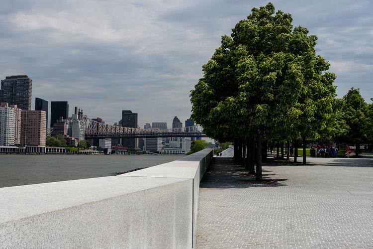Trees by footpath against buildings in city