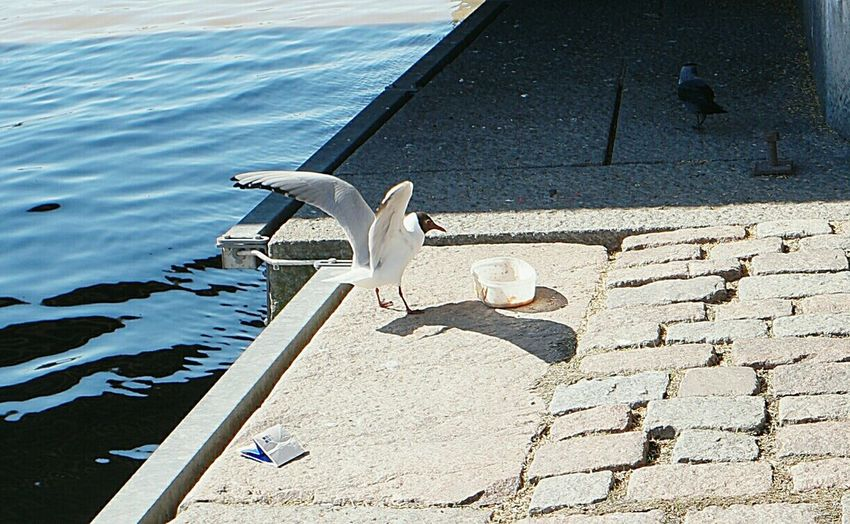 Urban Spring Fever Mayday  Sunny Day Seagulls In The City Mayday 2016 Urbanphotography Urban Life Seagulls City Finland Finland Summer Summer2016 Aurajoki Turku In Finland
