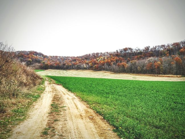 Wisconsin Life Fall Beauty Path Countryside Wisconsin Agriculture Green Color Growth Outdoors No People Grass Day Beauty In Nature Nature